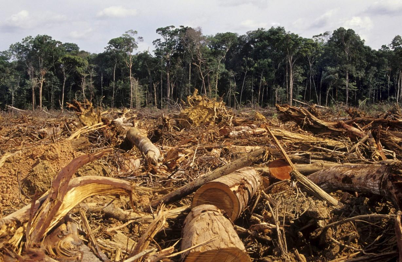 Amazzonia: mobilitazione globale per chiedere il veto sul nuovo Codice forestale