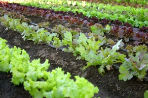 Mille orti in Africa per una completa sovranità alimentare