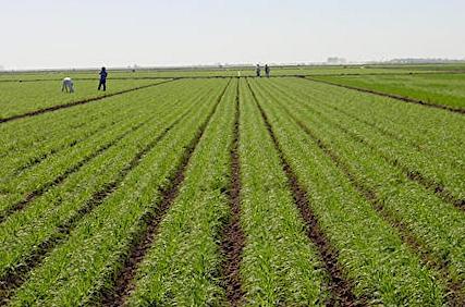 Riconvertire l'agricoltura al biologico. Ecco come e perché