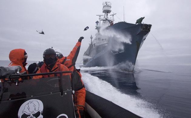 Salviamo Watson, fondatore e presidente di Sea Shepherd