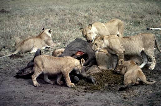Una petizione contro la 'caccia in scatola', una pratica crudele
