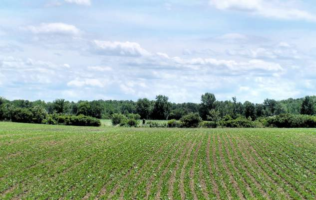 OGM: l'Università dellaTuscia dice addio alla sperimentazione