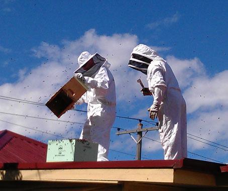 Api in città: a Melbourne il miele si produce sui tetti