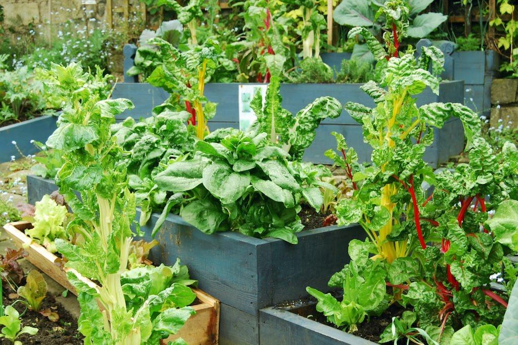 'Incredibilmente commestibile': la rivoluzione alimentare di Todmorden