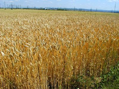L'Italia è in deficit di suolo agricolo