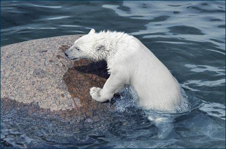 "Emergenza clima: ""serve una spending review in senso ambientale"""