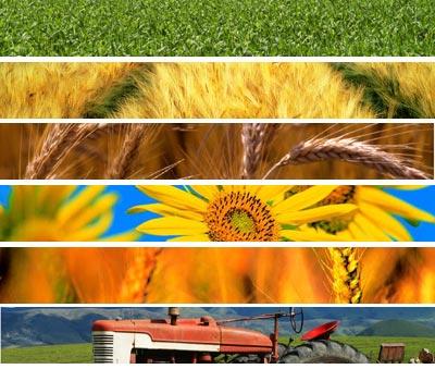 Politica Agricola Comune: la società civile incontra le istituzioni Ue