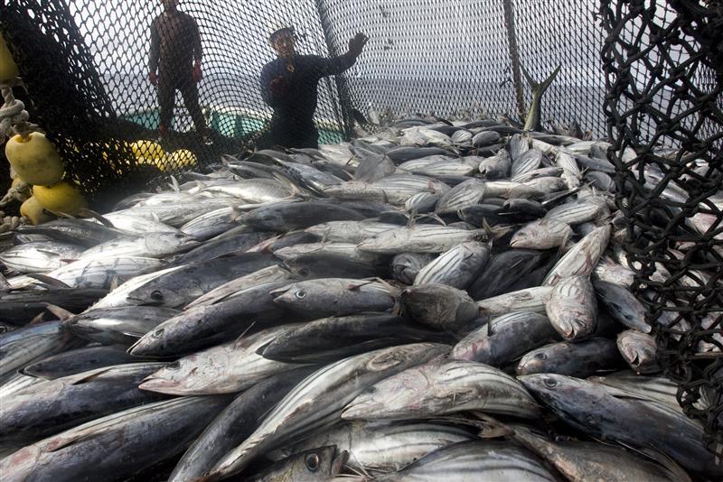Scatolette di tonno: in un caso su tre non sai cosa mangi
