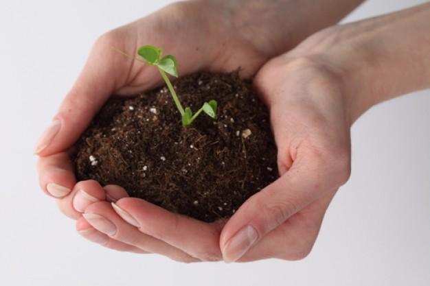L'utilizzo sostenibile della terra: corso di introduzione alla permacultura