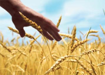 Sovranità alimentare e monetaria: la strategia dell'Unione europea