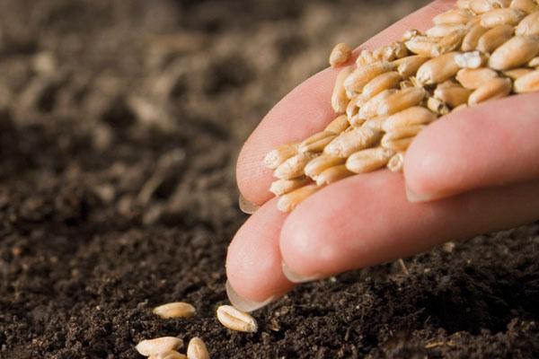 Liberare le sementi, l'appello da Terra Madre 2012