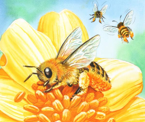 L'Unione Europea riconosce il valore delle api