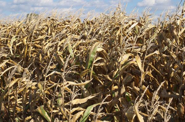Biocarburanti: l'Europa ci ripensa, ma non abbastanza