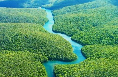 Ecuador, il governo mette all'asta la foresta amazzonica