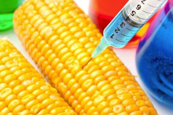 "OGM, decisione Ue senza contraddittorio. ""Necessaria clausola di salvaguardia"""