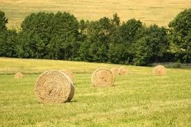 Riforma della Politica agricola comune: verso la chiusura dei negoziati