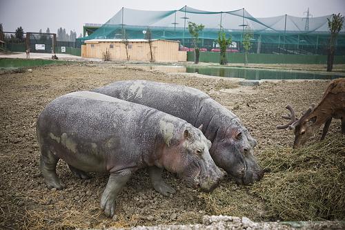 Zoo Safari di Ravenna: un business mascherato da polo didattico