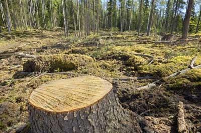 Deforestazione: Europa prima al mondo