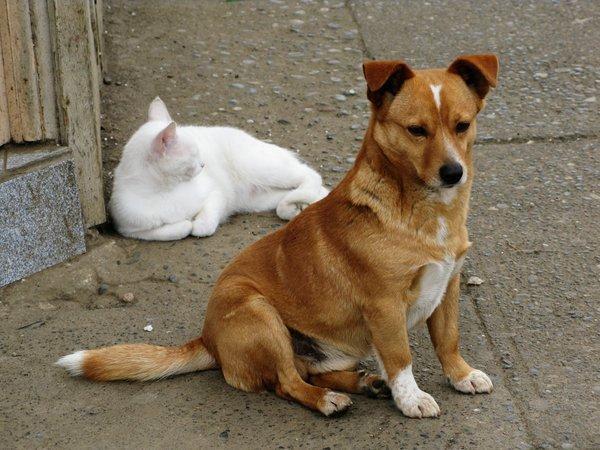 Estate, la campagna della Lav contro l'abbandono di animali