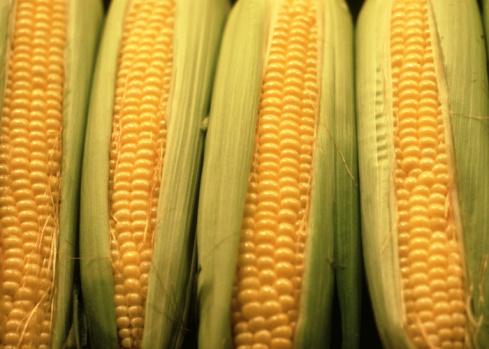 """Divieto di coltivazione OGM, """"finalmente il Governo interviene"""""""