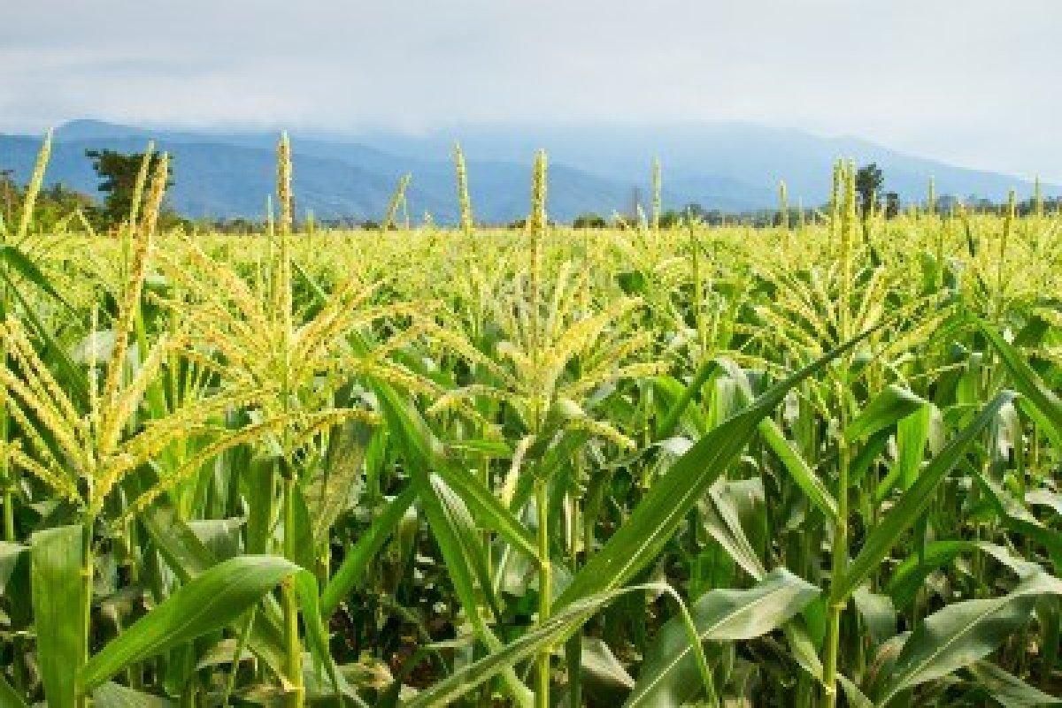 Agricoltura: l'Ue vuole soddisfare le multinazionali