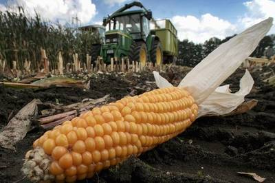 """OGM: """"subito decreto o contaminazione inevitabile"""""""