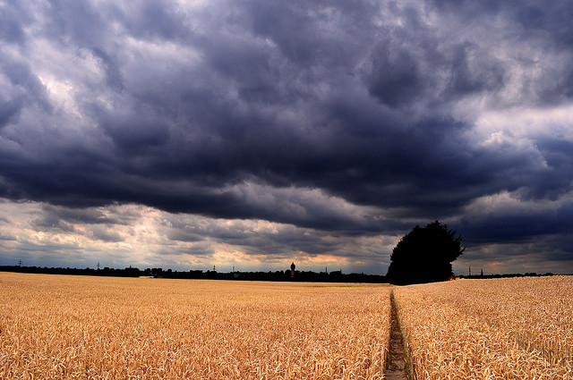 Aree agricole, nel mondo l'84% è a rischio