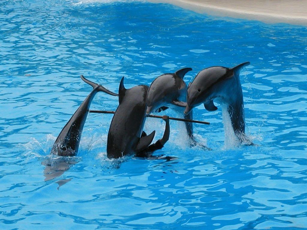 Rimini, multato il delfinario per maltrattamento degli animali