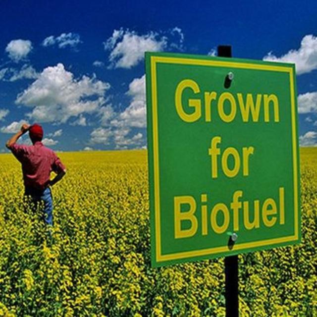 """Biocarburanti, """"occasione persa per il Parlamento europeo"""""""