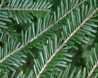 Tradizioni sotto l'albero: il Natale e le sue origini