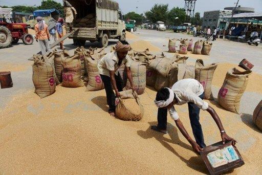Spreco di cibo e impatto ambientale, presentato Rapporto FAO