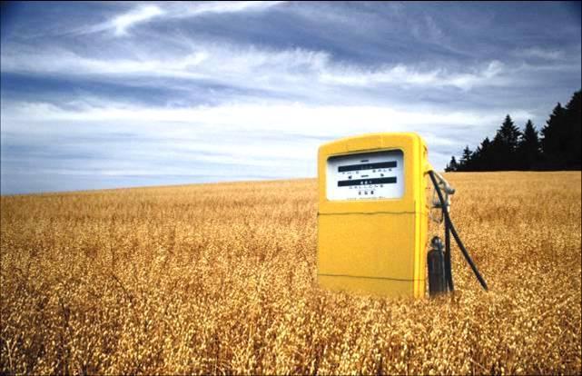 Bruciare cibo per avere biocombustibili? Un crimine contro l'umanità