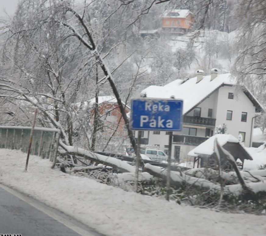 Gelicidio in Slovenia: le foreste distrutte