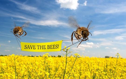 Le api salveranno il pianeta