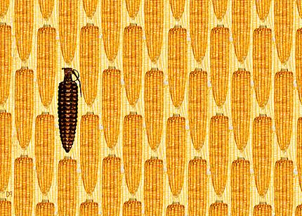 OGM, sulla coesistenza il dibattito è serrato