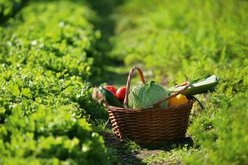Terra e futuro. L'agricoltura contadina ci salverà