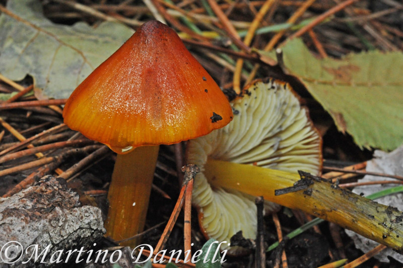 I funghi, essenziali per gli ecosistemi