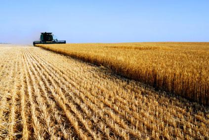 Ecco come l'agricoltura industriale sta facendo ammalare noi e la terra