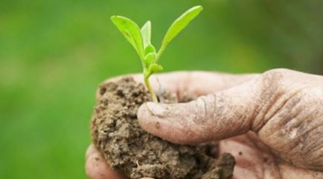 L'agricoltura rigenerativa medicina della terra