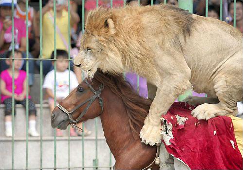 Zoo, in Cina messi al bando gli spettacoli con animali