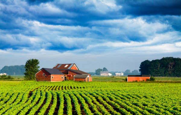 Cerchi terra da coltivare? Trovala così