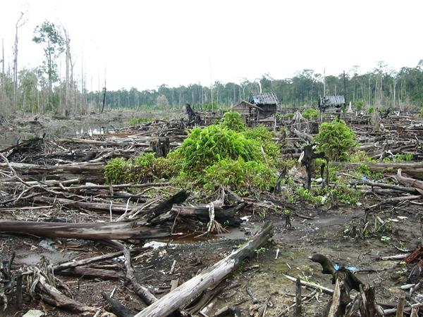Le accuse alla Nutella: «Distrugge le foreste»