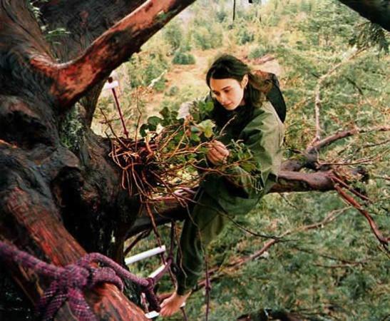 Julia e l'amore che salva le sequoie