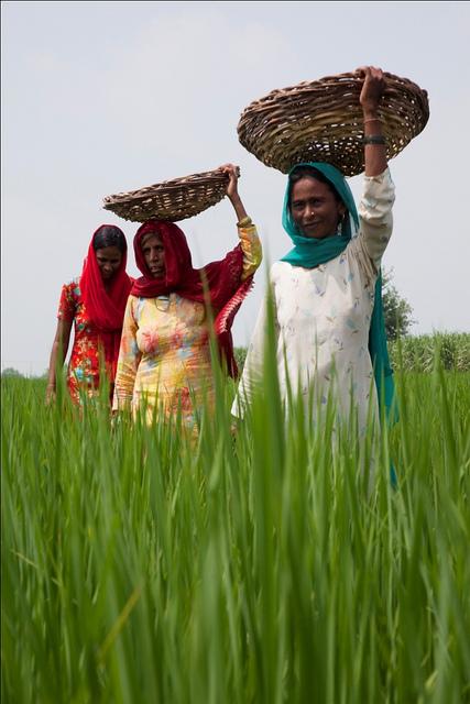 Fao: più potere alle donne nella lotta alla fame e alla povertà
