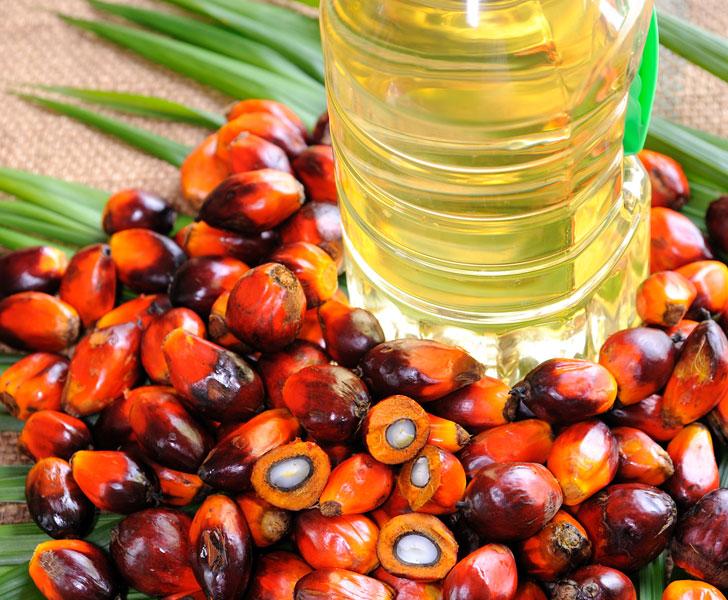 Olio di palma, condanna senza appello