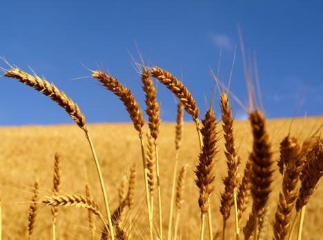 """Giappone, Confagricoltura: """"effetto terremoto sui prezzi cereali e generi alimentari"""""""