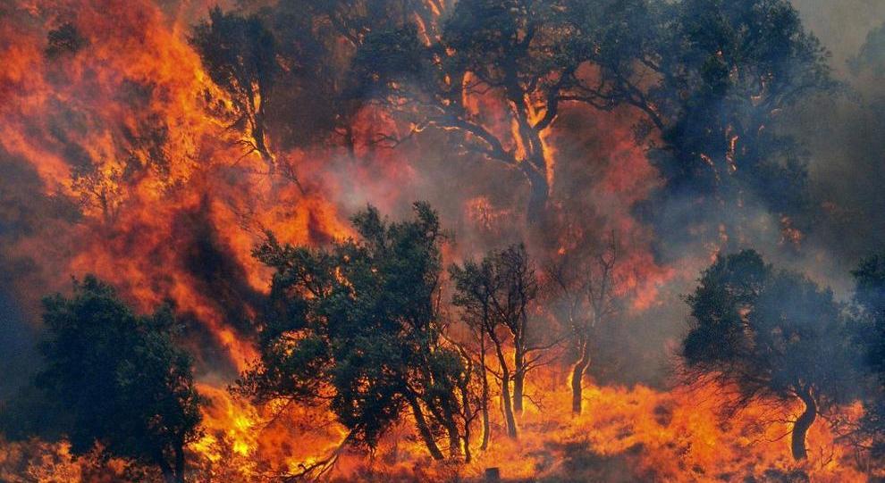 I retroscena della piaga degli incendi in Sardegna