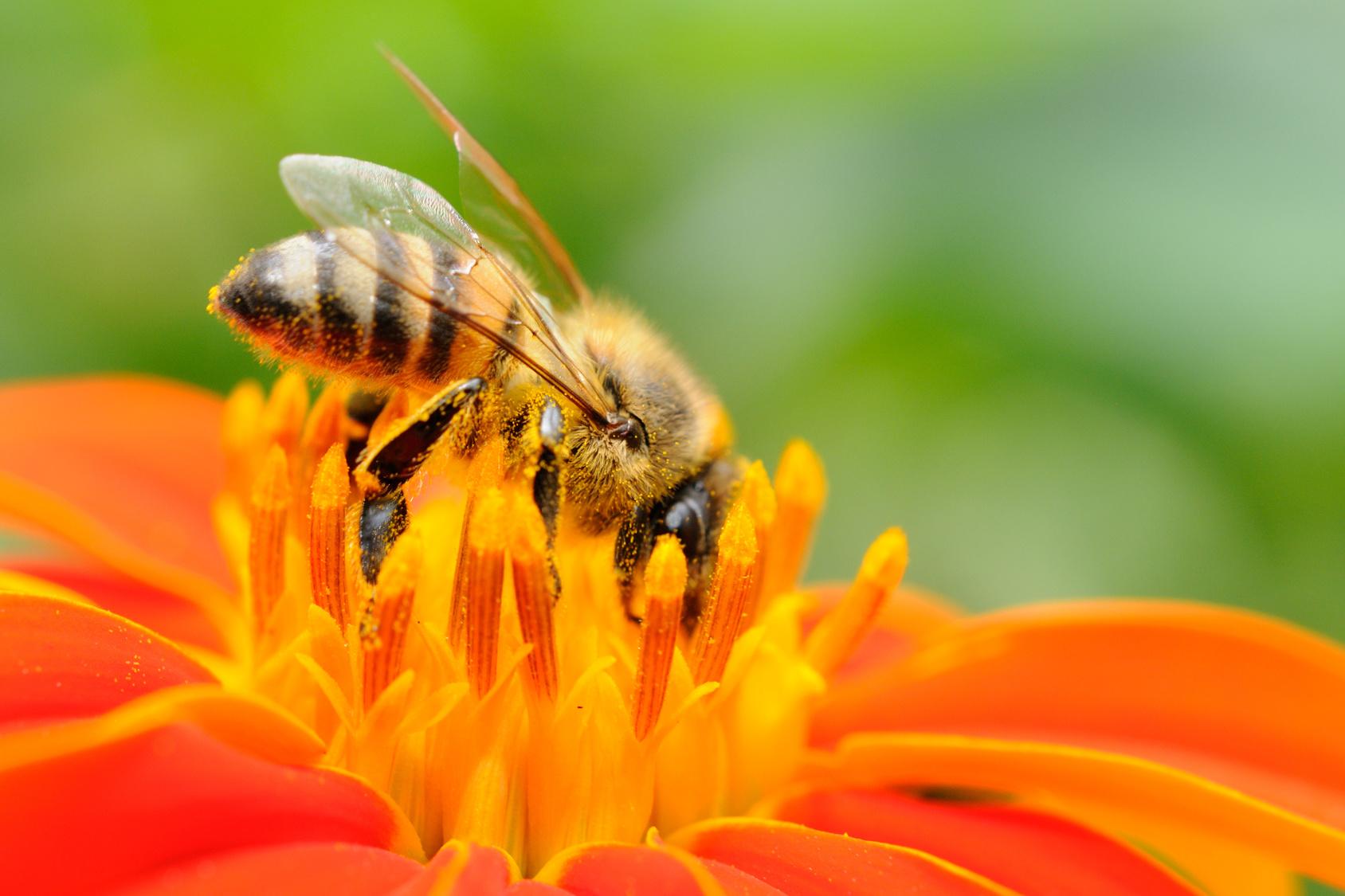 L'uomo che parla con le api