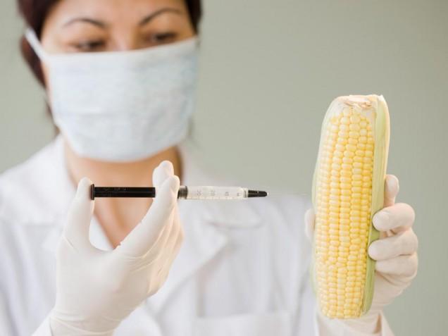 Sicurezza alimentare: Ogm tecnologia inaffidabile. Arriva il 'Mas'