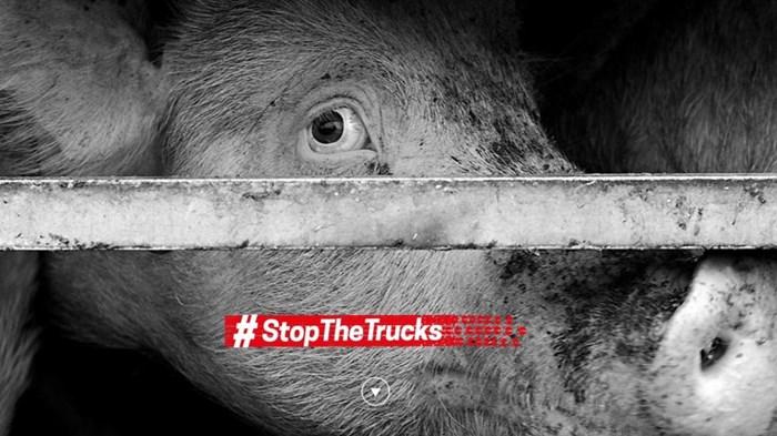Animali: «Fermiamo i viaggi della morte»